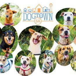 Official DogTownSA Merch Shop