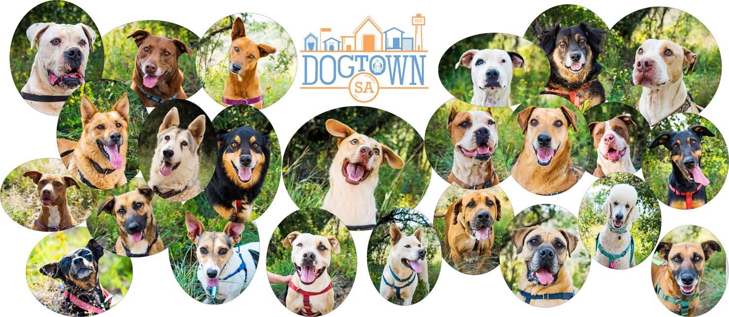 DogTownSA Shop