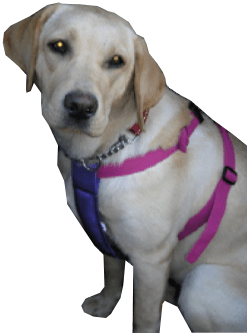 Care Safety Harness in Pink