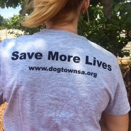Grey Dogtown South Africa Love Rescue