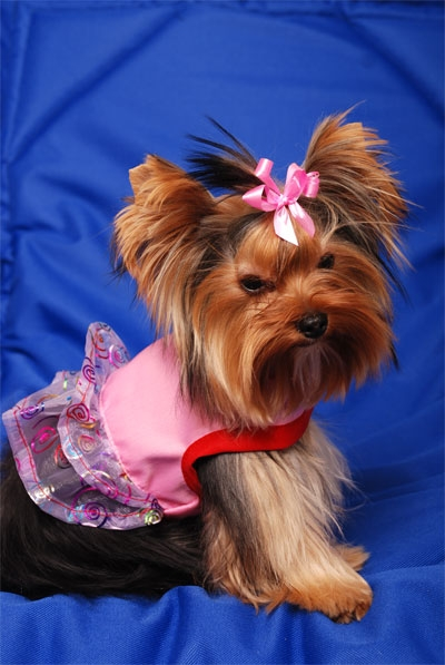 Yorkie Party Dress